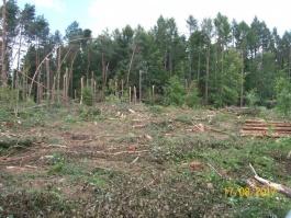 Komunikat dla właścicieli lasów niestanowiących własność Skarbu Państwa