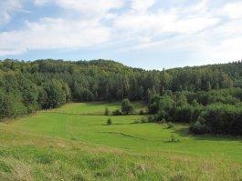 """Każdy może posadzić  """"Las Odrodzenia""""  - Nadleśnictwo Kartuzy zaprasza na wspólne sadzenie lasu na terenie Leśnictwa Kamionka w gminie Sierakowice"""