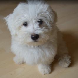 Informacja dla  właścicieli psów