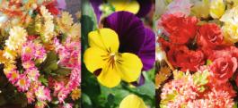 Święto Kwiatów i Krzewów