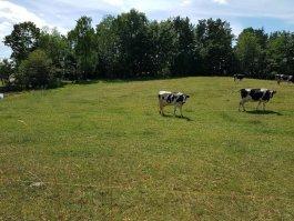 Spotkanie dla hodowców bydła