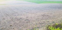 Badanie powierzchni upraw rolnych typu In-Situ na terenie Gminy Sierakowice